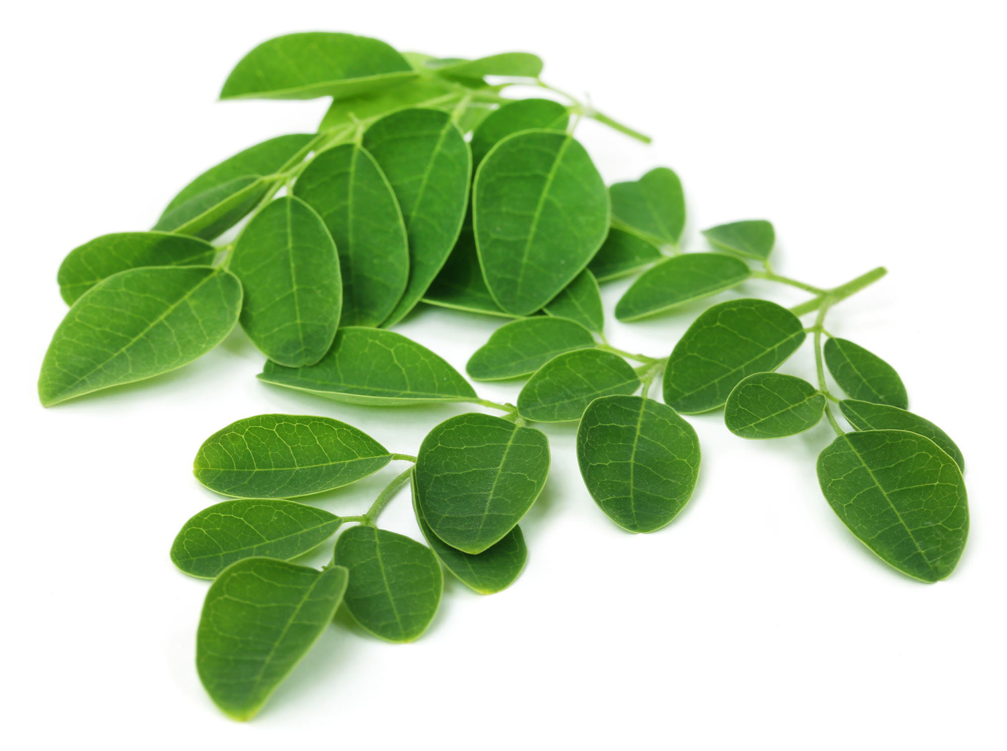 10 Reasons why you should drink Moringa Tea